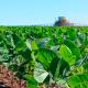 O desenvolvimento de tecnologias próprias permite ao Brasil, líder mundial na produção de soja, produzir o grão com sustentabilidade e […]